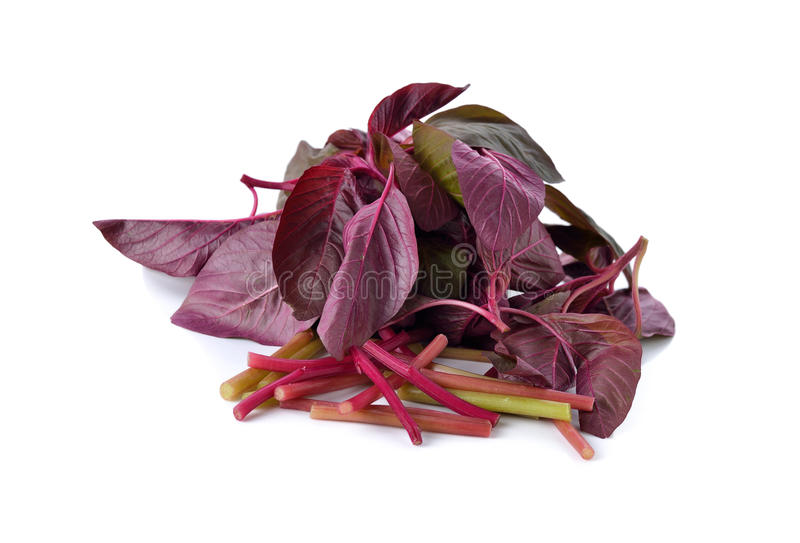 Frischer roter Spinat oder roter Amarant auf Weiß stockfoto