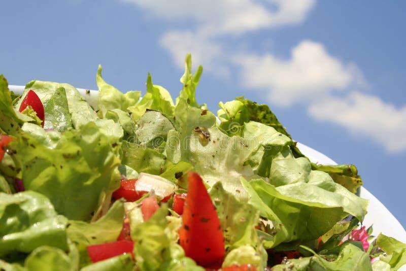 Frischer Salat und Tomate lizenzfreies stockbild