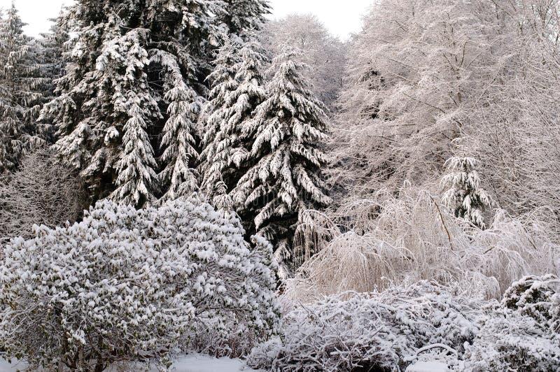 Frischer Schnee stockbilder