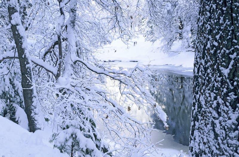 Frischer Schnee stockbild