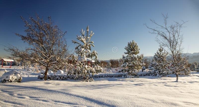 Frischer Schnee morgens im Park lizenzfreie stockfotografie