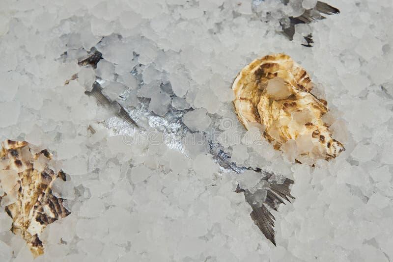 Frischer Seebarsch und geschlossene Austern im Eis bereit zum Kochen am Fischmarkt lizenzfreie stockfotografie
