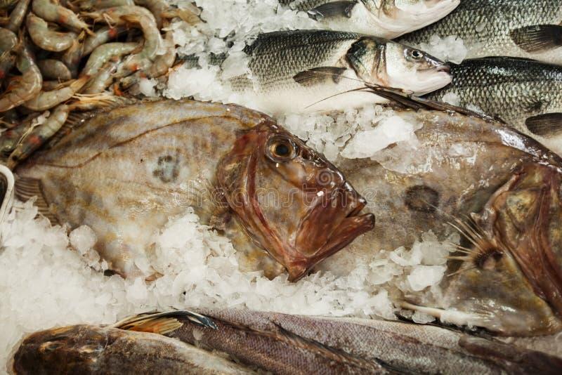 Frischer Seefisch John Dory, St Pierre stockfoto