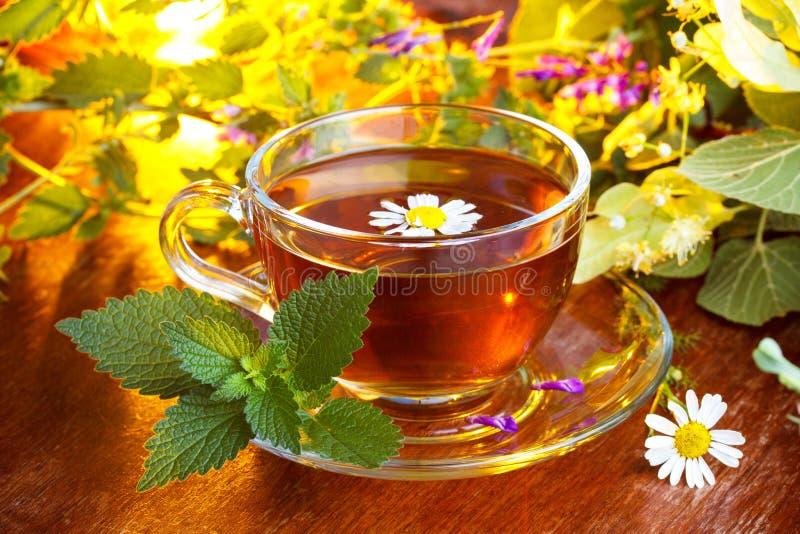 Frischer Tee der Kamille lizenzfreies stockbild
