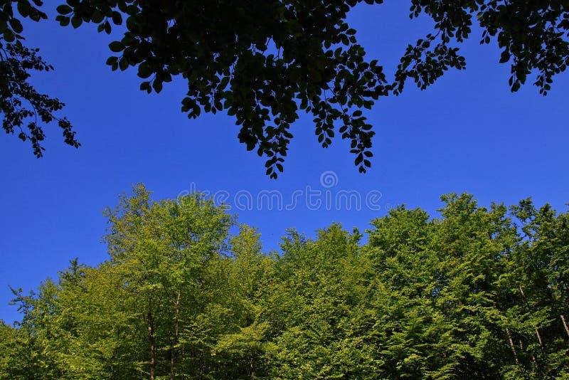 Frischer und grüner Wald im Frühjahr, Deutschland lizenzfreie stockfotos