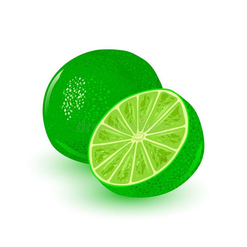 Frischer und saftiger Kalk Runde grüne Frucht der reifen Zitrusfrucht Bestandteil mit saurem Aroma lizenzfreie abbildung