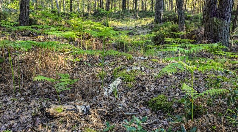 Frischer Wald im Frühjahr stockbild