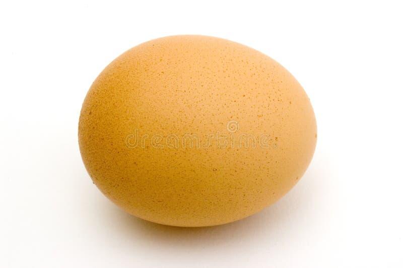 Frisches Ei lizenzfreie stockfotos