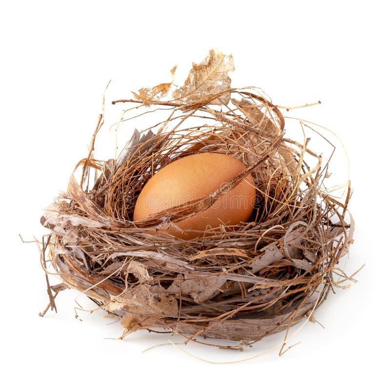 Frisches Ei sitzt in einem natürlichen Nest, das auf weißem Hintergrund lokalisiert wird stockfoto