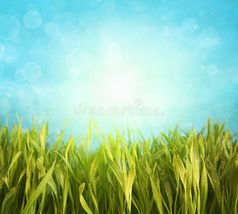 Frisches Frühlingsgras mit blauem Himmel stockbilder