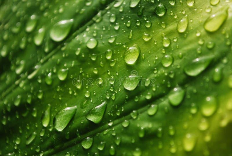 Frisches grünes Blatt stockfotos