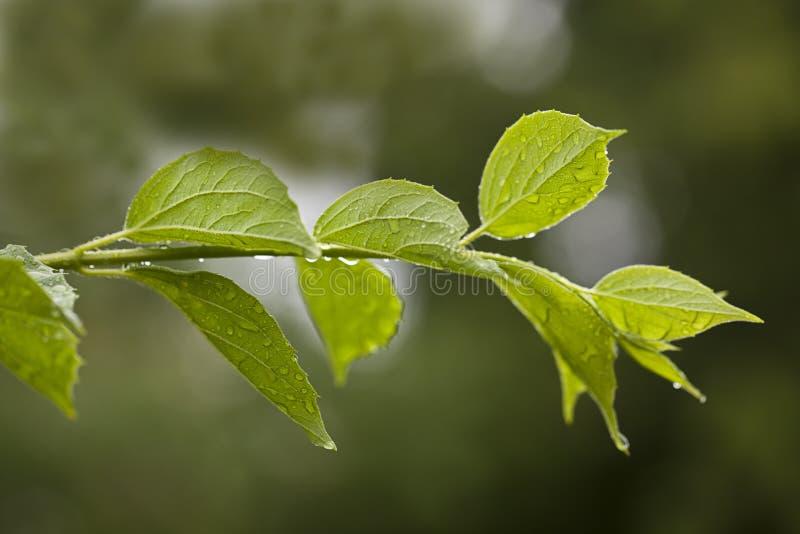 Frisches grünes Blatt im Frühjahr stockbilder