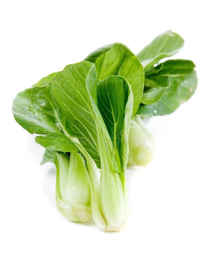 Frisches grünes bok choi, ein orientalisches Gemüse. lizenzfreies stockbild