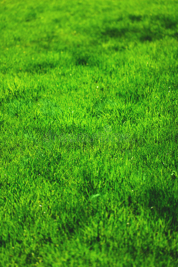 Frisches grünes Gras stockbilder