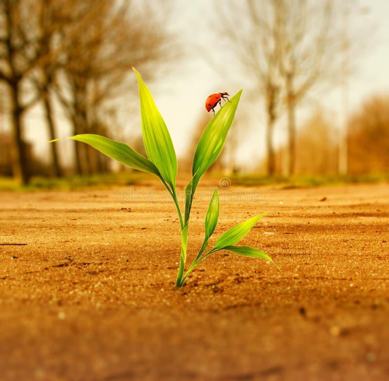 Download Frisches grünes Gras stockbild. Bild von cataclysm, land - 9075991