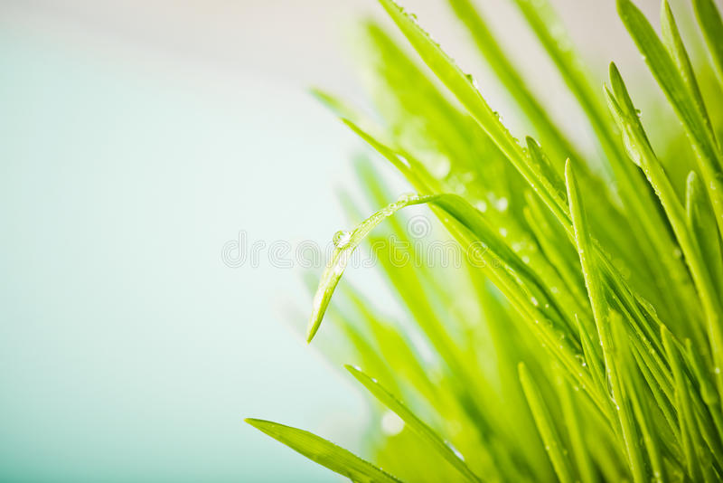 frisches grünes Gras der Natur mit befeuchtet Tropfen stockbild