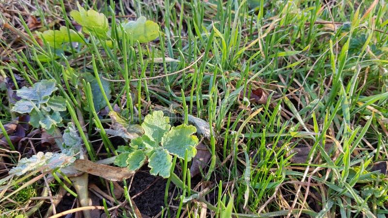 Frisches grünes Gras und wild wachsende Pflanzen lizenzfreies stockbild
