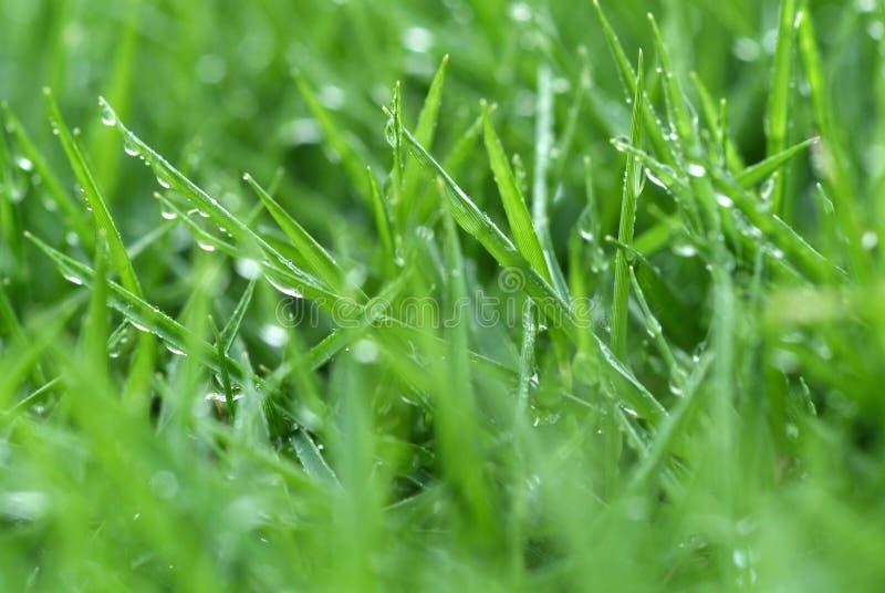 Frisches Gras lizenzfreie stockfotografie