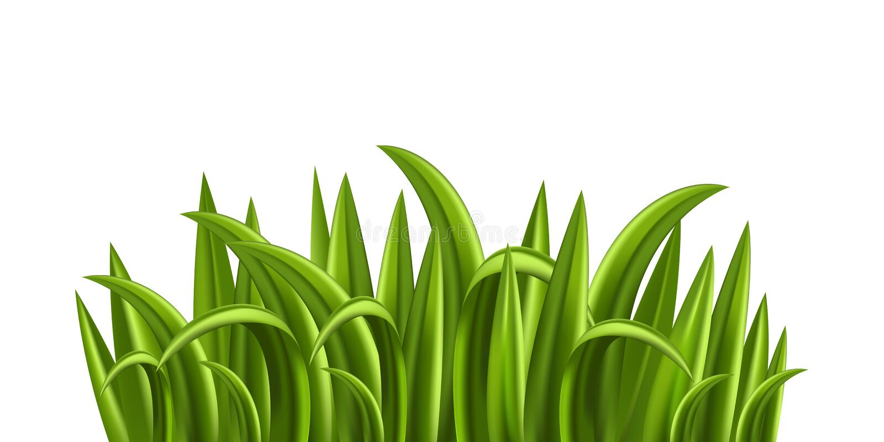 Frisches Gras stock abbildung