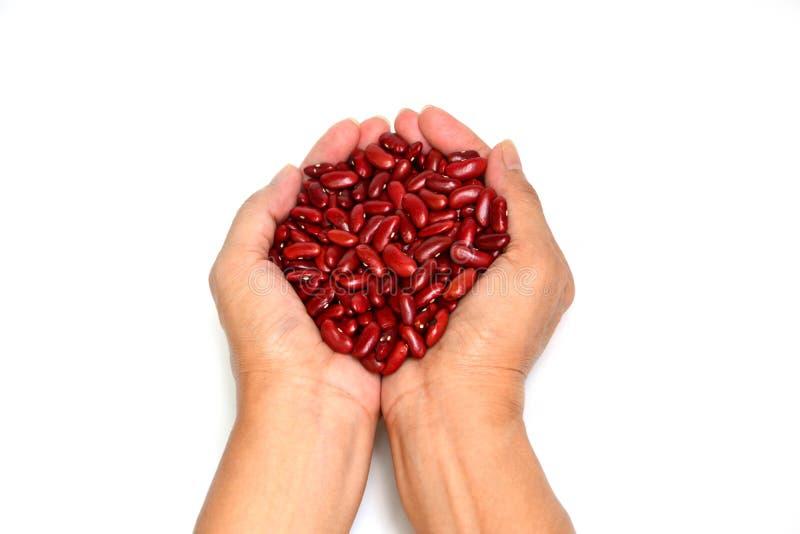 Frisches Isolat der roten Bohnen in der Hand auf Weiß stockfotos
