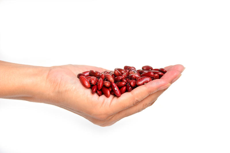 Frisches Isolat der roten Bohnen in der Hand auf Weiß lizenzfreie stockfotografie