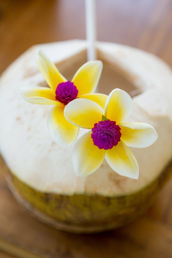 Frisches Kokosnussgetränk stockbild