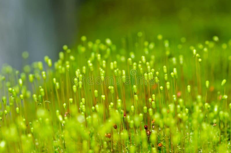 Frisches Moos in der grünen Natur lizenzfreie stockfotografie