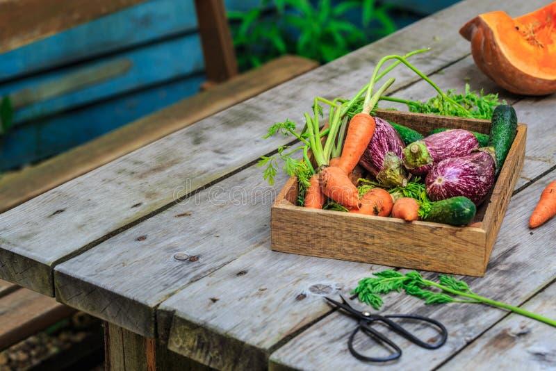 Frisches organisches Gemüse im hölzernen Korb auf Bretterboden mit Kopienraum Konzeptgem?se frisch vom Bauernhof lizenzfreie stockbilder