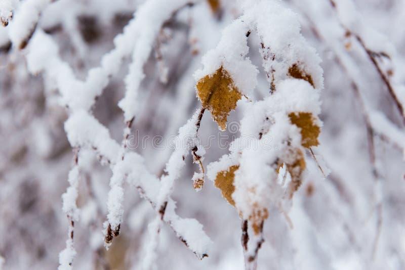 Frisches Pulver auf den Bäumen in Farellones lizenzfreies stockbild