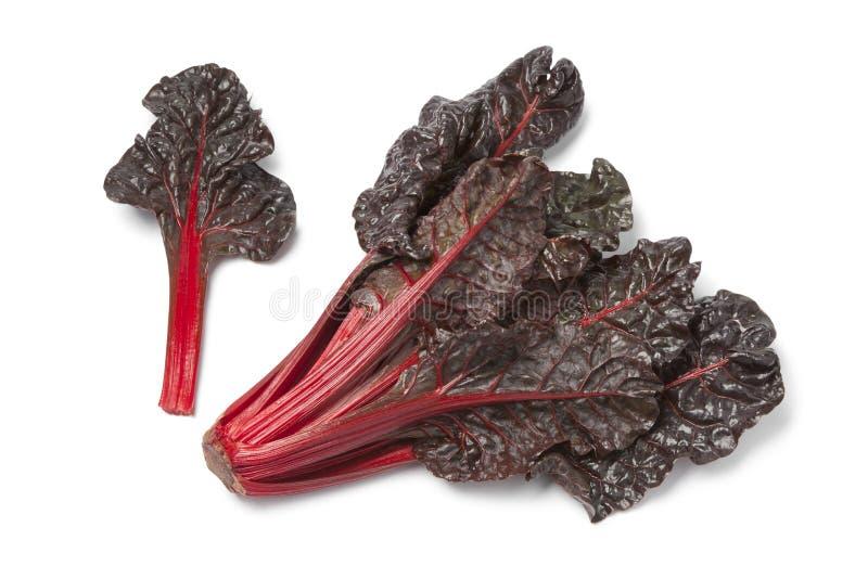 Frisches rotes Mangoldgemüse lizenzfreie stockfotografie
