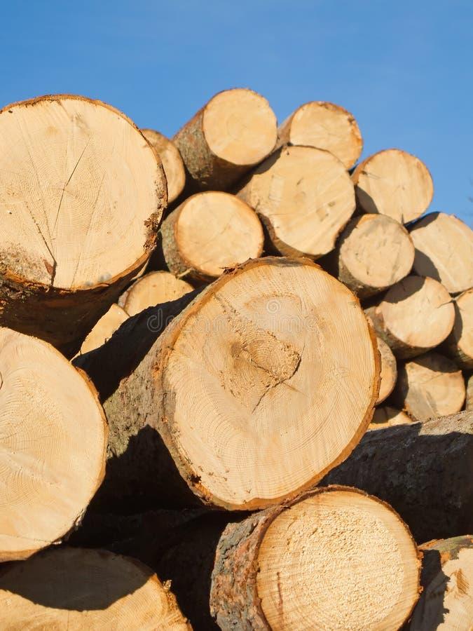 Frisches Schnittholz lizenzfreie stockfotos