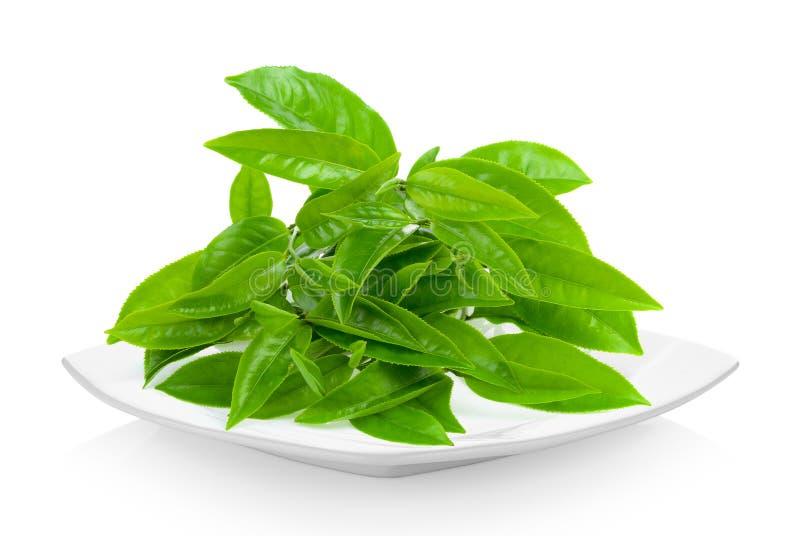 Frisches Teeblatt in der keramischen weißen Platte auf weißem Hintergrund stockbild