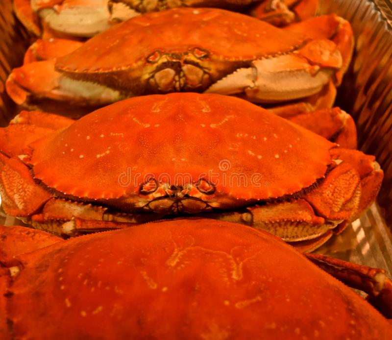 Frisches Washington State Cooked Crab stockfoto