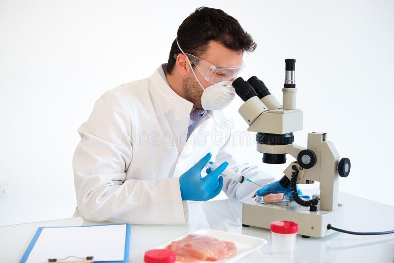 Frischfleischbeispielqualitätskontrolle im Labormikroskop lizenzfreie stockfotografie