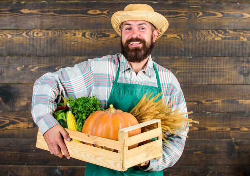 FrischgemüseZustelldienst Frischer organischer Gemüsekasten Landwirthippie-Strohhut liefern Frischgemüse Mann stockbild