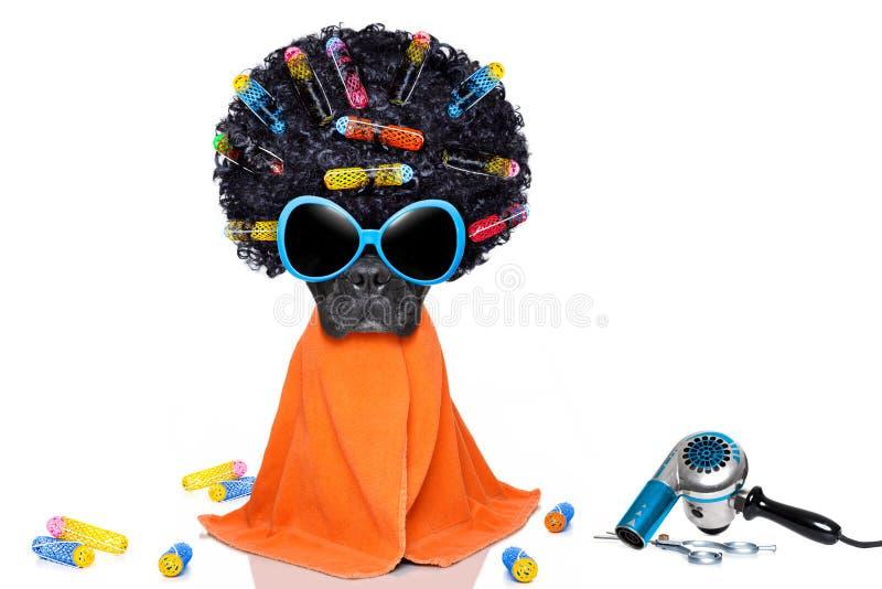Friseur Groomerhund stockfoto
