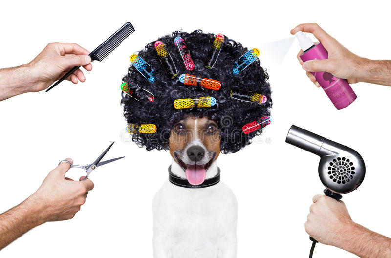 Friseur scissors Kammhundespray lizenzfreie stockfotografie