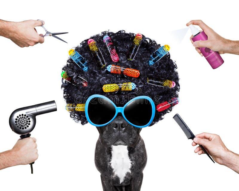 Friseurhund stockfoto
