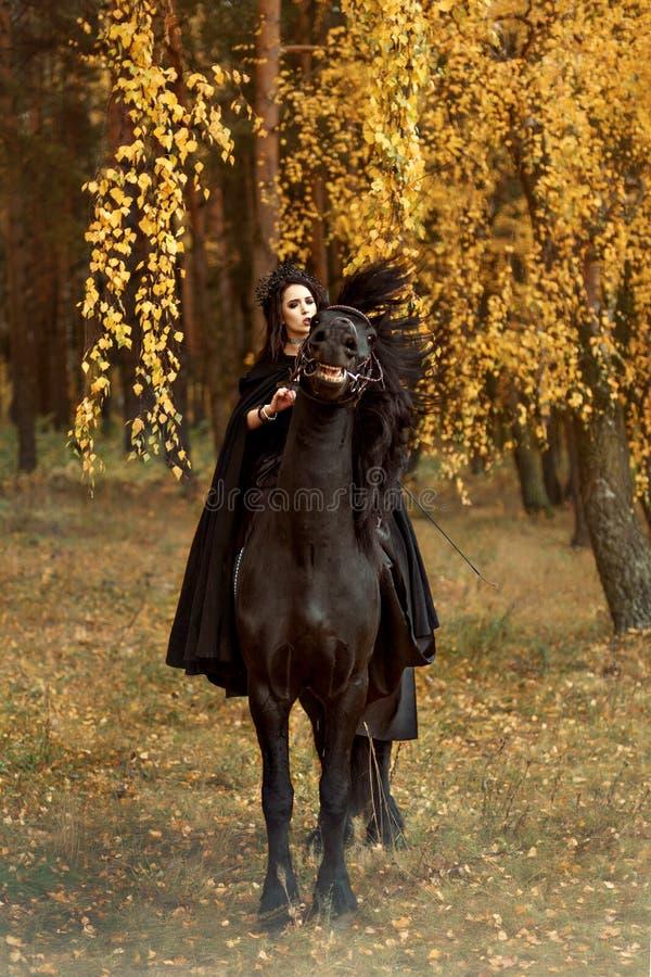 Frisianhästhingsten gör framsidor och skakar löjligt hans huvud under en skicklig ryttarinnaflicka i svart royaltyfria foton