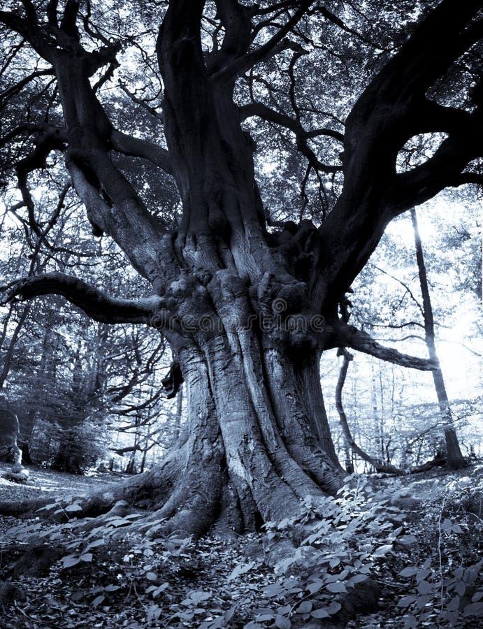 Frithsden Beeches Ashridge Hertfordshire England royalty free stock photos