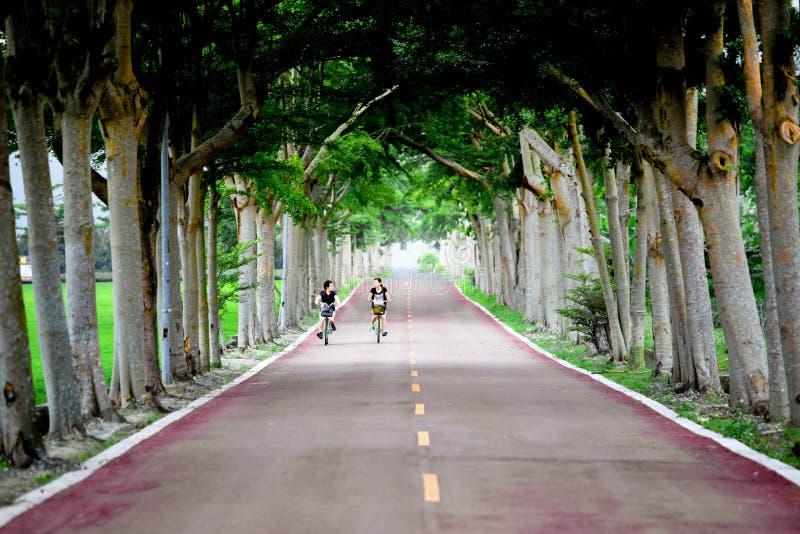Fritidbild av flickor som rider cykeln längs en härlig elasticitet av vägen som fodras med träd royaltyfri fotografi