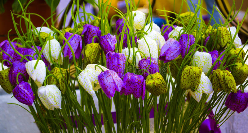 Fritillaria fleurit le fritillaria images stock