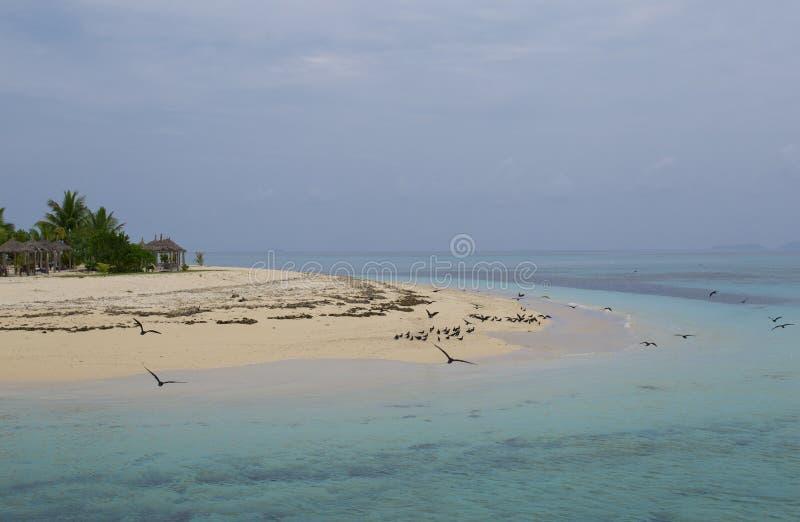 Fritt flyg över den avlägsna ön arkivbild