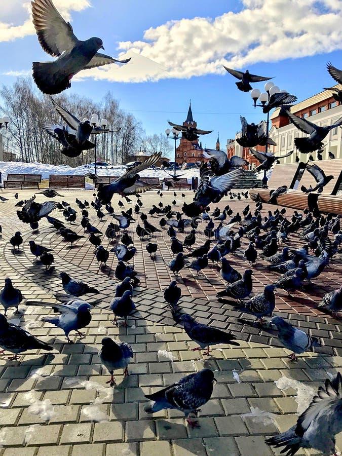 Fritt flyg som fjädrar arkivbild