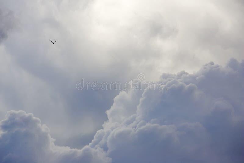 Download Fritt soar till fotografering för bildbyråer. Bild av frihet - 506883
