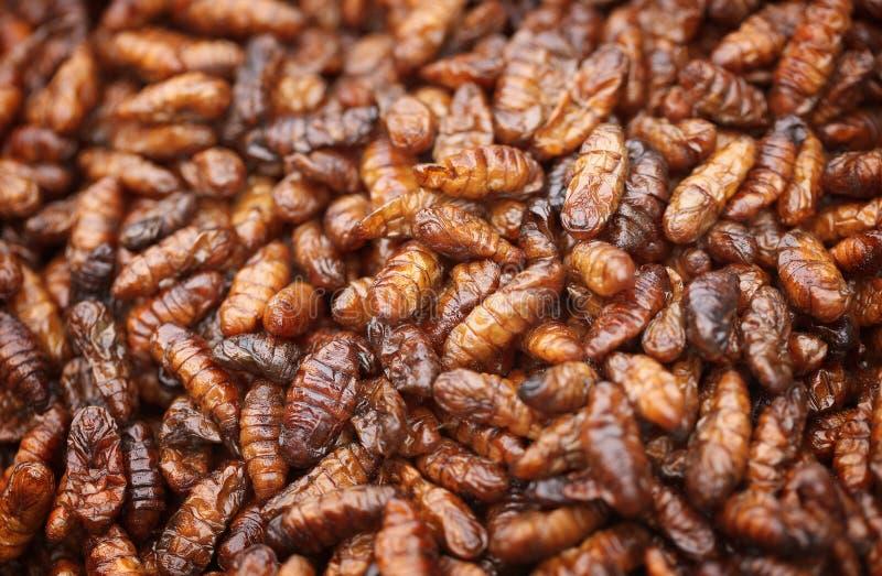 Fritto nelle larve del baco da seta dell'olio immagine stock