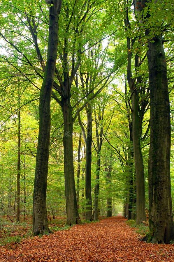 frodig bana för skog arkivbild