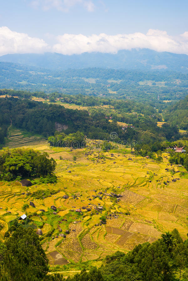 Frodig grön risfält, expansivt landskap i Indonesien arkivbilder