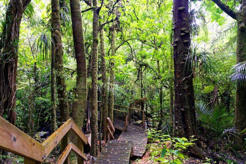 Frodig grön skog i Nya Zeeland arkivbilder