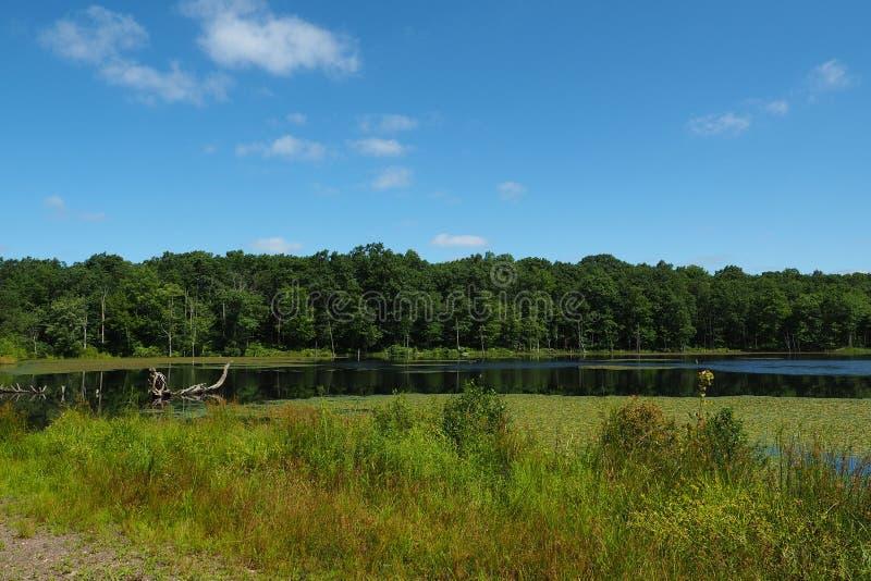 Frodig grön skog och blå himmel på kust av berg sjön arkivbild